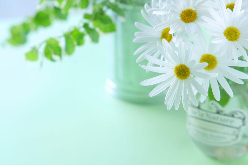 花瓶の中のマーガレット