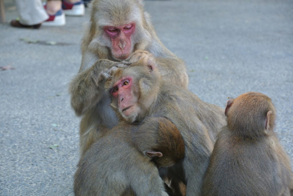 毛繕いをされる猿
